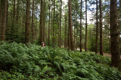 armathwaite_woods