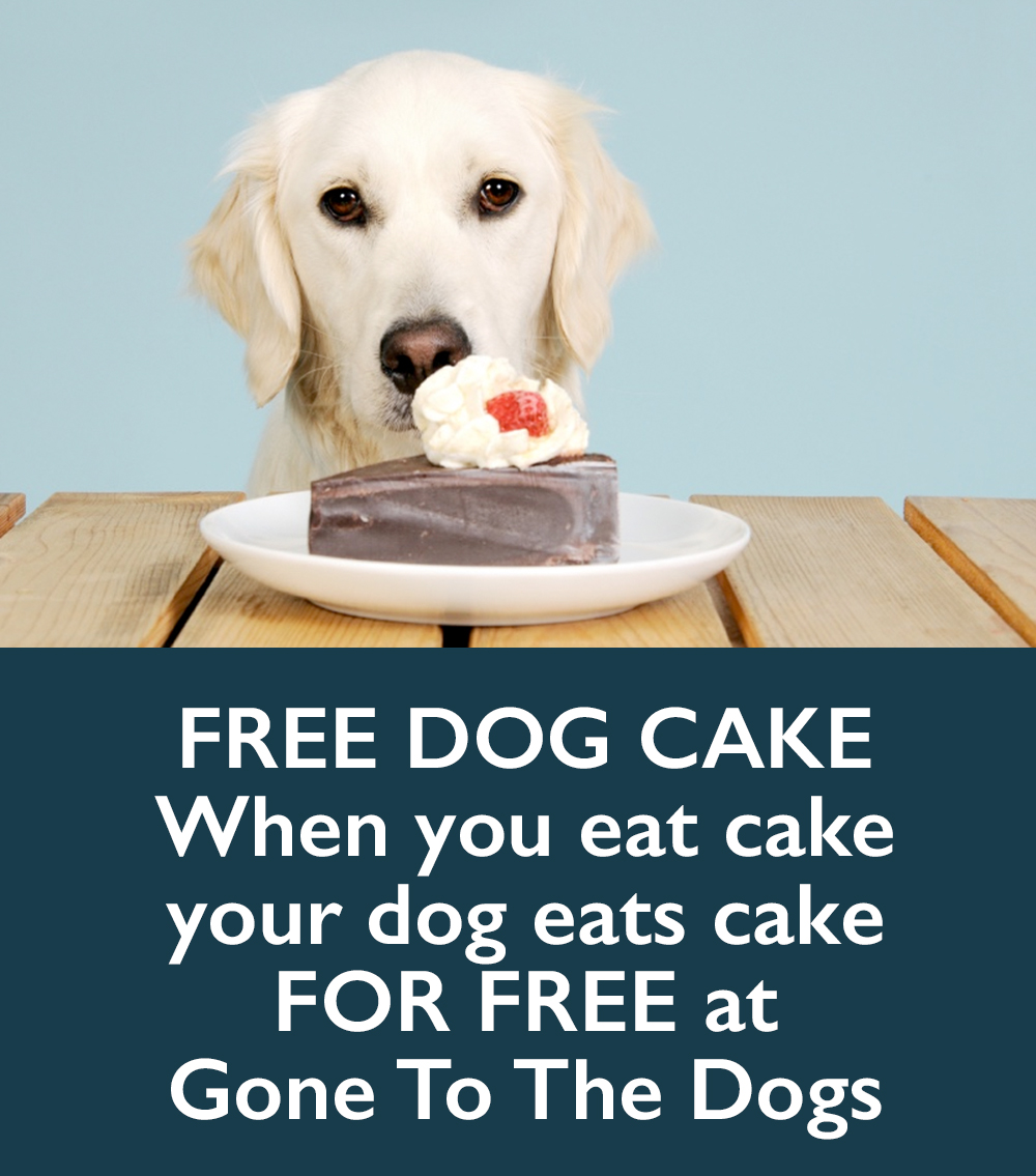 Free Dog Cake Gone To The Dogs