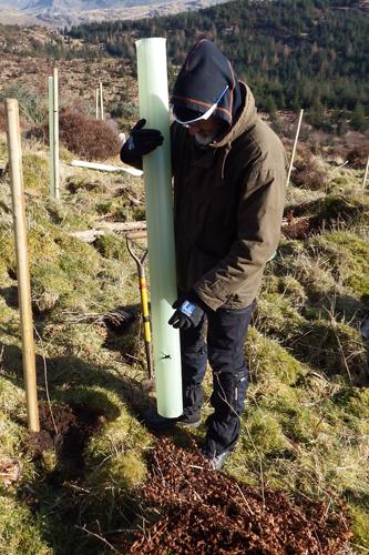 Restoring Hardknott Forest